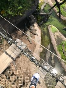 Wild Africa Trek- Animal Kingdom Theme Park
